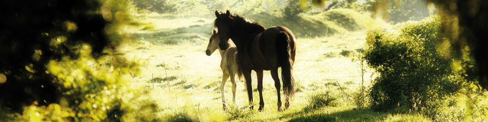 Diagnostic Animals - Fur Metal Tests - Equine Horse